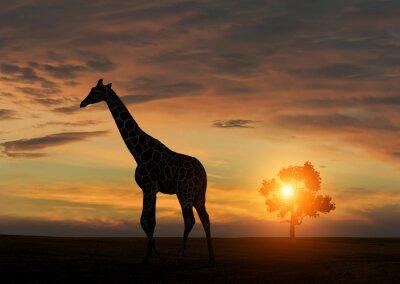 Плакат Жираф во время Африканский закат