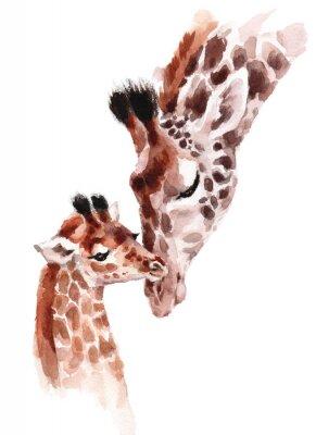 Плакат Жирафы Матери и ребенка Акварель ручной росписью иллюстрации диких животных на белом фоне