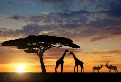 Плакат Жирафы с Куду на закате
