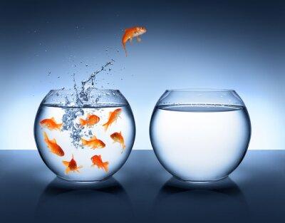 Плакат Золотая рыбка прыгает - совершенствование и Карьера Концепция