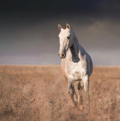 Плакат Серая лошадь бежать