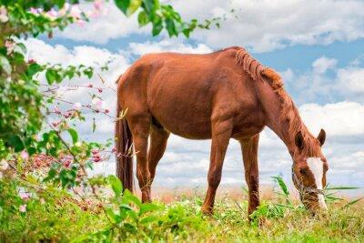 Плакат Выпас Браун лошадь на зеленом пастбище с красивой природой