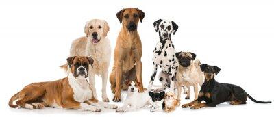 Плакат Gruppe verschiedener Hunde - Группа собак