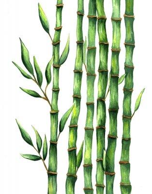 Плакат Нарисованная рукой бамбуковая акварель иллюстрации