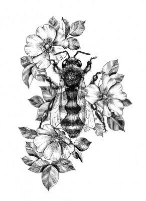 Плакат Hand Drawn Monochrome Bee among  Dog Rose Flowers