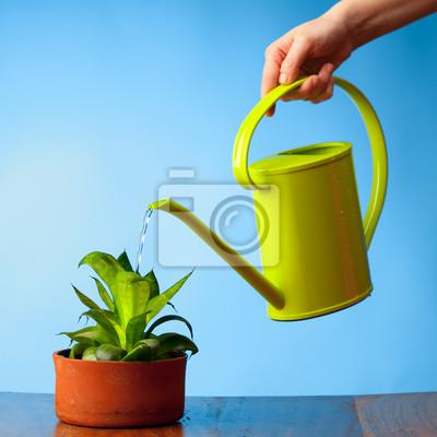 Как полить цветы чаем