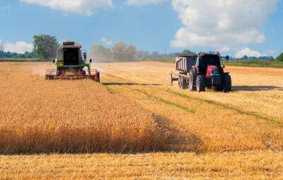 Плакат Комбайн и трактор сбор пшеницы на солнечный летний день