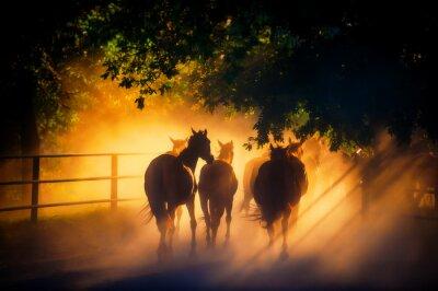 Плакат табун лошадей