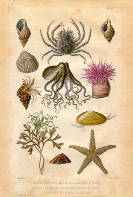 Плакат Histoire натуральном: фонд Марин