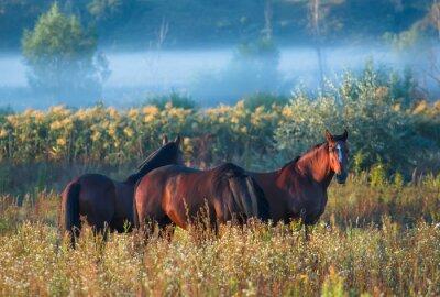 Плакат лошадь