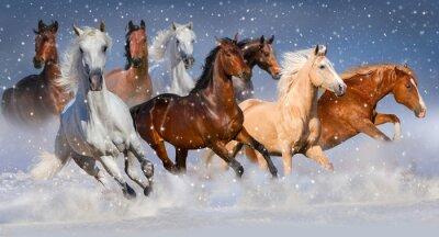 Плакат Табун лошадей быстро бегать зимой снежном поле