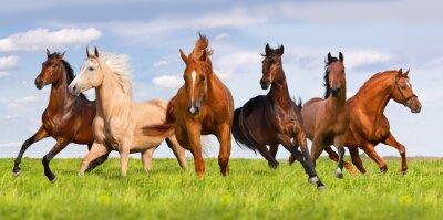 Плакат Horse herd run in beautiful green meadow