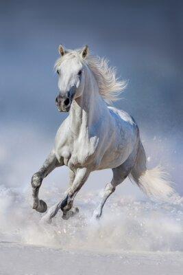 Плакат Лошадь в снегу