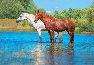 Плакат лошади