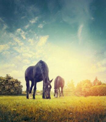 Плакат Лошади пасутся в осеннем лугу на фоне деревьев и неба