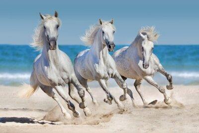 Плакат Лошади бежать вдоль побережья