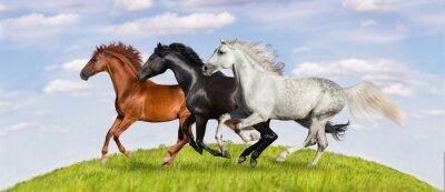 Плакат Лошади бежать галопом на зеленые пастбища против красивых неба