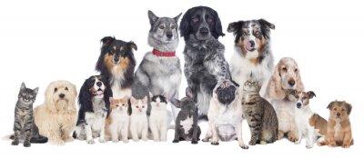 Плакат Hunde унд Katzen Gruppe