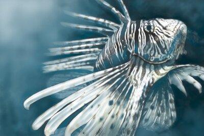 Плакат Иллюстрации, сделанные с помощью цифрового планшета скорпион рыбы опасной,