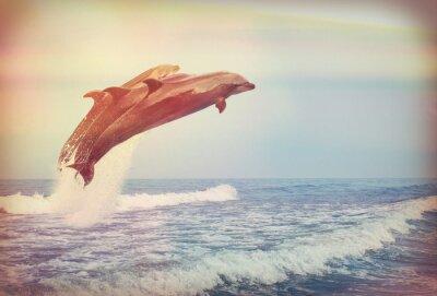 Плакат прыжки дельфинов, Instagram