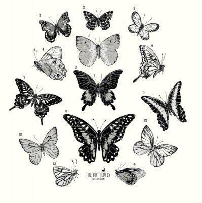 Плакат Большая коллекция бабочек, рисованной иллюстрации набор isolated.Vector