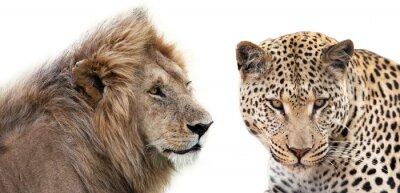 Плакат Леоне электронной Leopardo Insieme