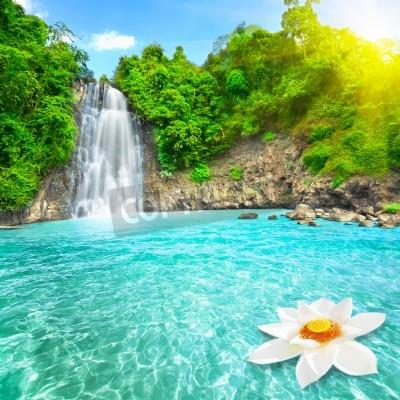 Плакат Цветок лотоса в бассейне водопада