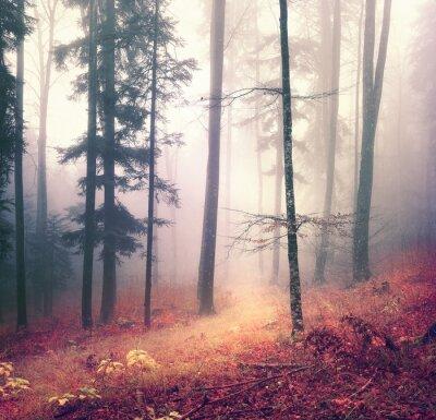 Плакат Магия цвета осеннего сезона лесных деревьев фон с ярко-оранжевой красной дорожке. Красивая сезонный лес.