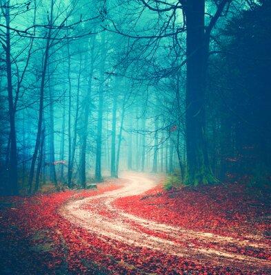 Плакат Магия старинных лесных дорог