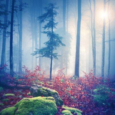 Плакат Волшебный свет в туманный лес с солнцем