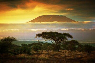 Плакат Гора Килиманджаро. Саванна в Амбосели, Кения