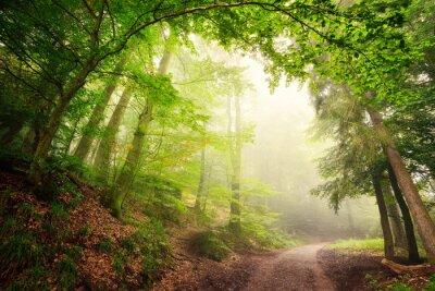 Плакат Natürlicher Torbogen aus Bäumen