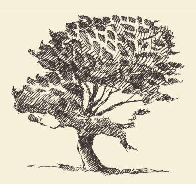 Плакат Старое дерево старинные иллюстрации ручной обращается эскиз
