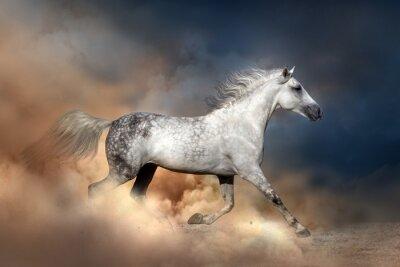 Плакат Орлов лошадь бежать в пыли