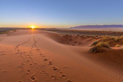 Плакат Oryx tracks to sunset