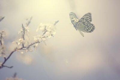 Плакат Пастель цветные фото бабочки и весенние цветы