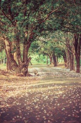 Плакат Путь под деревом туннеля с цветами в винтажном атмосфере
