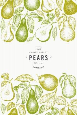 Плакат Pear design template. Hand drawn vector garden fruit illustration. Engraved style garden fruit frame. Retro botanical banner.