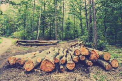 Плакат Куча древесины в лесу у дороги, старинные фотографии.