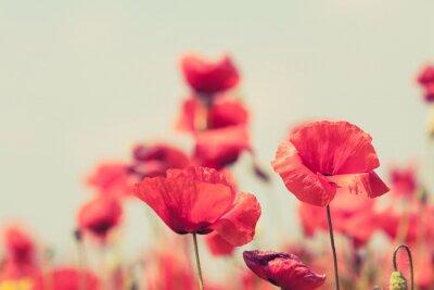Плакат Poppy flowers retro peaceful summer background