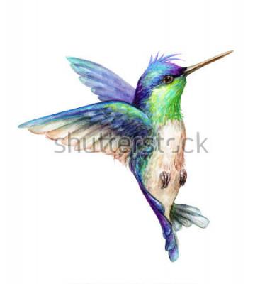 Плакат Акварельные иллюстрации, летающие колибри, изолированные на белом фоне, экзотические, тропические, дикая жизнь клипа