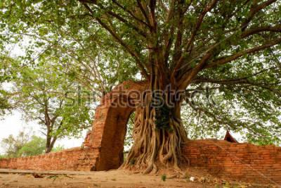 Плакат Wat Phra Ngam (заброшенный) Аюттхая Врата времени Арка окружена фо.