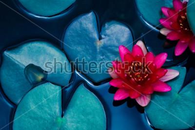 Плакат водная растительность, водная растительность, символ буддизма.