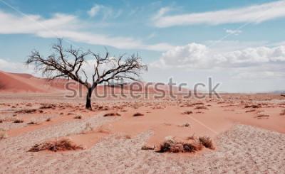 Плакат Дерево пустыни