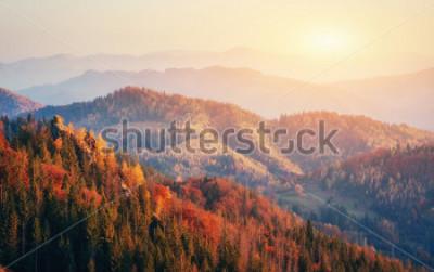 Плакат Прекрасный вид на лес в Солнечный день. Осенний пейзаж Карпаты. Украина, Европа