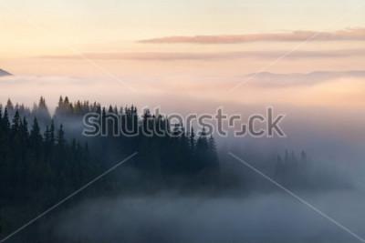 Плакат Лес в горах покрыт туманом