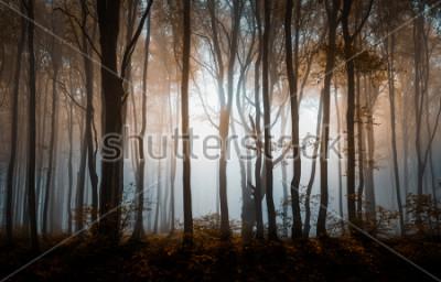 Плакат Осенний туманный лес. Балканские горы, Болгария.