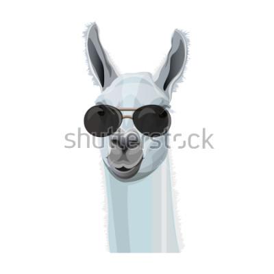 Плакат Комический портрет ламы в черных очках. Векторные иллюстрации на белом фоне