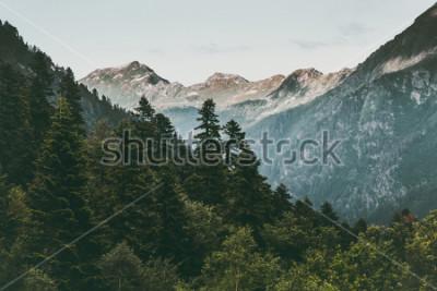 Плакат Хвойный лес и горы Пейзаж Путешествие безмятежный пейзаж лето зеленый