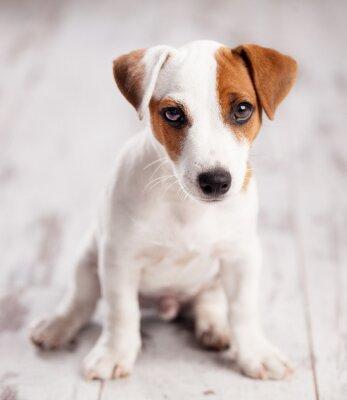 Плакат щенок